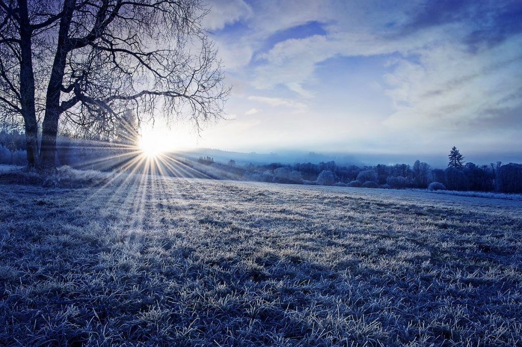 How to Protect Your Land From Freezing Temperatures