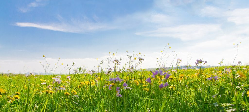Spring is in the Air: The Benefits of Selling & Purchasing Property During Springtime